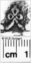 Image Description for https://www.wlb-stuttgart.de/kyriss/images/s0136403.jpg