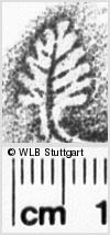 Image Description for https://www.wlb-stuttgart.de/kyriss/images/s0140742.jpg