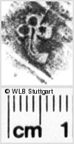 Image Description for https://www.wlb-stuttgart.de/kyriss/images/s0140858.jpg