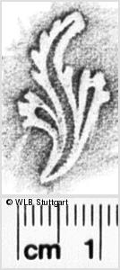 Image Description for https://www.wlb-stuttgart.de/kyriss/images/s0142108.jpg