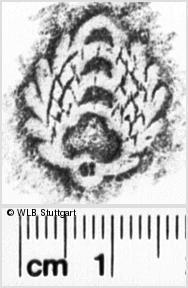 Image Description for https://www.wlb-stuttgart.de/kyriss/images/s0142121.jpg