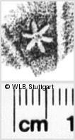 Image Description for https://www.wlb-stuttgart.de/kyriss/images/s0142233.jpg