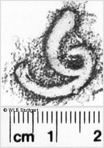 Image Description for https://www.wlb-stuttgart.de/kyriss/images/s0142249.jpg