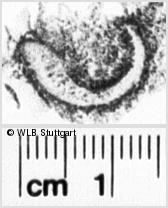 Image Description for https://www.wlb-stuttgart.de/kyriss/images/s0142254.jpg