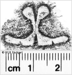 Image Description for https://www.wlb-stuttgart.de/kyriss/images/s0142363.jpg