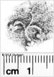 Image Description for https://www.wlb-stuttgart.de/kyriss/images/s0143166.jpg