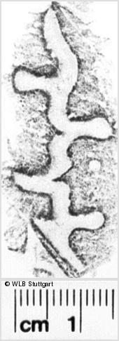 Image Description for https://www.wlb-stuttgart.de/kyriss/images/s0144323.jpg