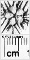 Image Description for https://www.wlb-stuttgart.de/kyriss/images/s0145830.jpg