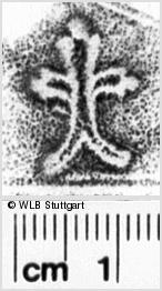 Image Description for https://www.wlb-stuttgart.de/kyriss/images/s0151104.jpg