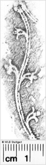 Image Description for https://www.wlb-stuttgart.de/kyriss/images/s0152805.jpg