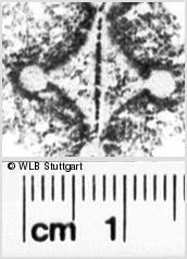 Image Description for https://www.wlb-stuttgart.de/kyriss/images/s0154506.jpg