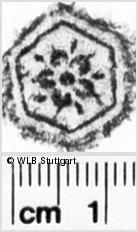 Image Description for https://www.wlb-stuttgart.de/kyriss/images/s0155927.jpg