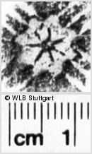 Image Description for https://www.wlb-stuttgart.de/kyriss/images/s0170203.jpg