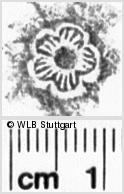 Image Description for https://www.wlb-stuttgart.de/kyriss/images/s0170713.jpg