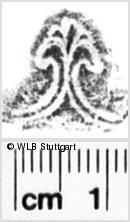 Image Description for https://www.wlb-stuttgart.de/kyriss/images/s0172112.jpg