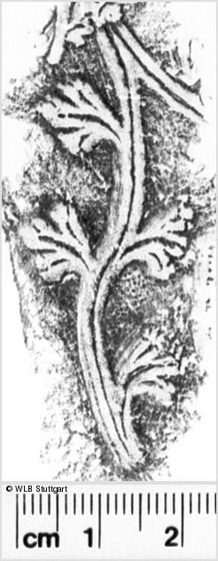 Image Description for https://www.wlb-stuttgart.de/kyriss/images/s0174005.jpg