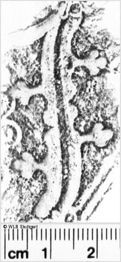 Image Description for https://www.wlb-stuttgart.de/kyriss/images/s0174708.jpg