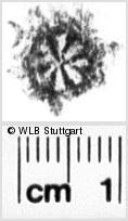 Image Description for https://www.wlb-stuttgart.de/kyriss/images/s0180609.jpg