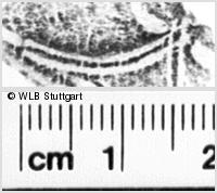 Image Description for https://www.wlb-stuttgart.de/kyriss/images/s0180816.jpg