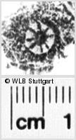 Image Description for https://www.wlb-stuttgart.de/kyriss/images/s0191907.jpg