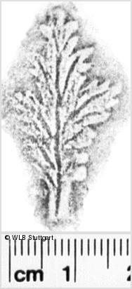 Image Description for https://www.wlb-stuttgart.de/kyriss/images/s0194006.jpg