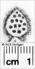 Image Description for https://www.wlb-stuttgart.de/kyriss/images/s0200322.jpg