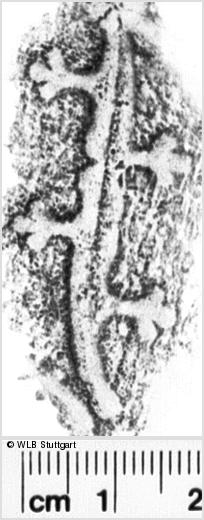 Image Description for https://www.wlb-stuttgart.de/kyriss/images/s0201106.jpg