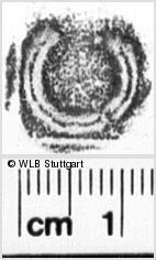 Image Description for https://www.wlb-stuttgart.de/kyriss/images/s0201215.jpg