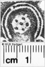 Image Description for https://www.wlb-stuttgart.de/kyriss/images/s0201719.jpg