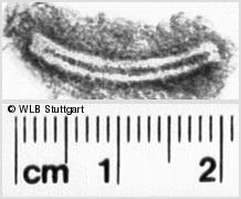 Image Description for https://www.wlb-stuttgart.de/kyriss/images/s0202212.jpg
