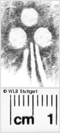 Image Description for https://www.wlb-stuttgart.de/kyriss/images/s0210510.jpg