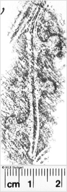 Image Description for https://www.wlb-stuttgart.de/kyriss/images/s0215010.jpg