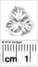 Image Description for https://www.wlb-stuttgart.de/kyriss/images/s0218607.jpg