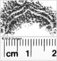 Image Description for https://www.wlb-stuttgart.de/kyriss/images/s0222807.jpg