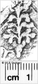 Image Description for https://www.wlb-stuttgart.de/kyriss/images/s0230905.jpg
