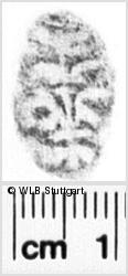 Image Description for https://www.wlb-stuttgart.de/kyriss/images/s0232027.jpg