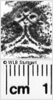 Image Description for https://www.wlb-stuttgart.de/kyriss/images/s0237709.jpg