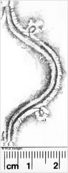 Image Description for https://www.wlb-stuttgart.de/kyriss/images/s0241217.jpg