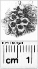 Image Description for https://www.wlb-stuttgart.de/kyriss/images/s0243224.jpg