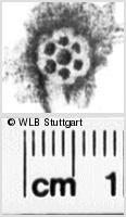 Image Description for https://www.wlb-stuttgart.de/kyriss/images/s0245606.jpg
