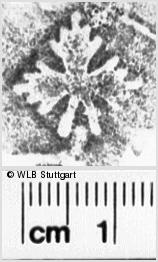 Image Description for https://www.wlb-stuttgart.de/kyriss/images/s0245612.jpg