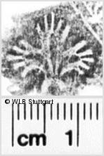 Image Description for https://www.wlb-stuttgart.de/kyriss/images/s0250307.jpg