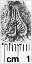 Image Description for https://www.wlb-stuttgart.de/kyriss/images/s0251616.jpg
