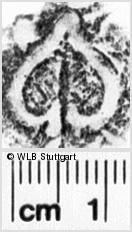 Image Description for https://www.wlb-stuttgart.de/kyriss/images/s0254529.jpg