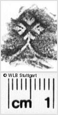 Image Description for https://www.wlb-stuttgart.de/kyriss/images/s0254624.jpg