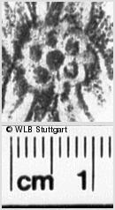 Image Description for https://www.wlb-stuttgart.de/kyriss/images/s0255012.jpg