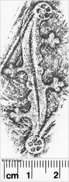 Image Description for https://www.wlb-stuttgart.de/kyriss/images/s0260612.jpg