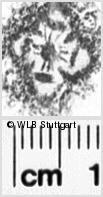 Image Description for https://www.wlb-stuttgart.de/kyriss/images/s0260730.jpg