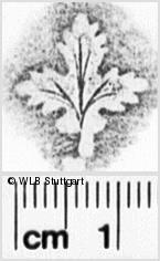 Image Description for https://www.wlb-stuttgart.de/kyriss/images/s0260735.jpg