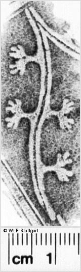 Image Description for https://www.wlb-stuttgart.de/kyriss/images/s0261402.jpg